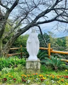 大山教会の桜待つマリア像